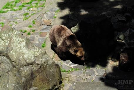 Bären im Schlossgraben