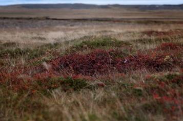 Typische Vegetation