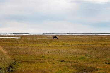 Weide beim Vikingerdorf unter dem Vestrahorn