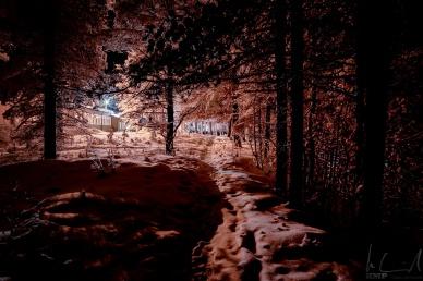 Wald hinter dem Hotel Kultahovi