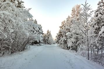 Im Wald neben dem Fluss Juutuanjoki