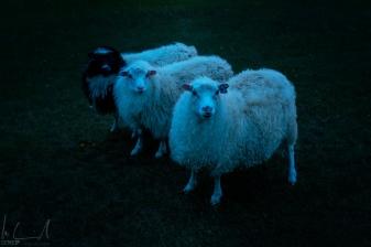 Interessierte Zuschauer bei der Nachtfotografie
